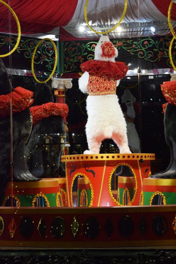 12 Days of Christmas at Dallas Aboratorium